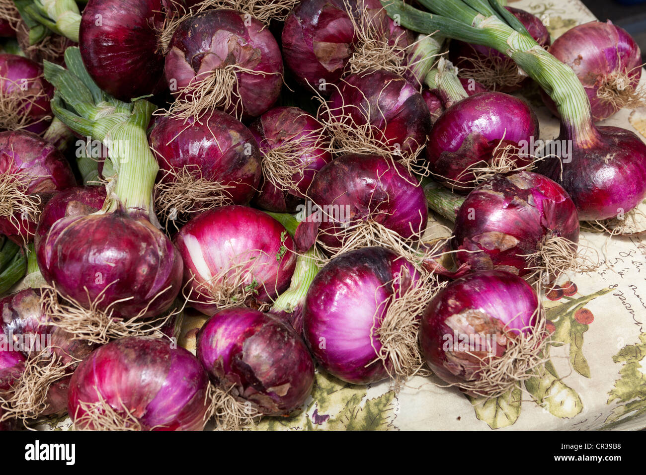Red onions with stem at local farmers market - Stockton, California USA - Stock Image