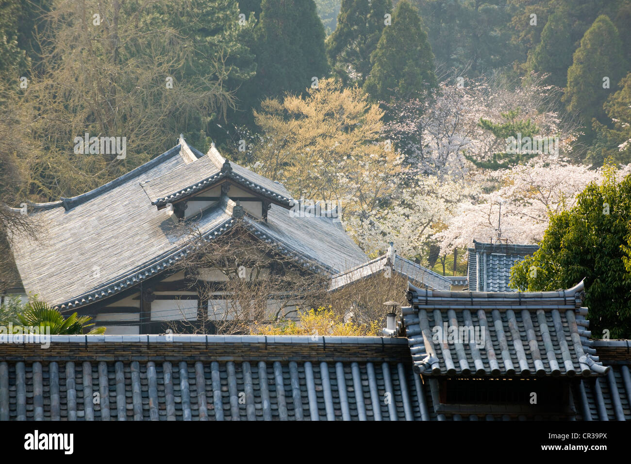 Japan, Honshu Island, Kinki Region, city of Nara, Historic Monuments of Ancient Nara UNESCO World Heritage, view Stock Photo