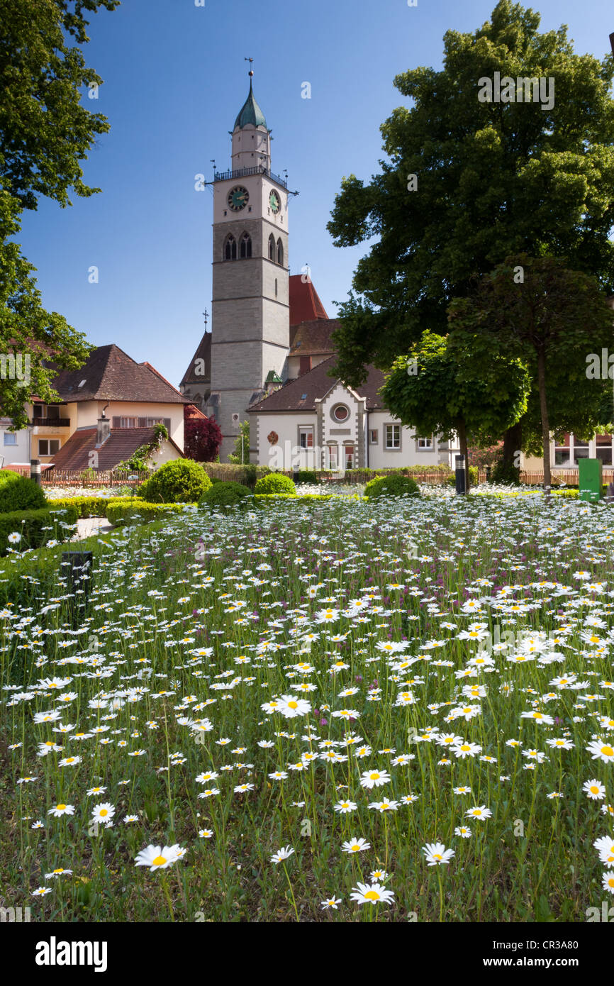 Flowers daisies stock photos flowers daisies stock images alamy field of flowers daisies leucanthemum in front of the st nikolaus izmirmasajfo