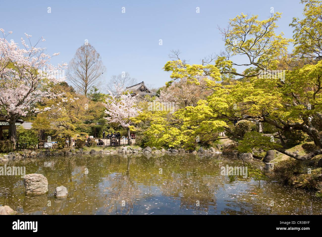 Japan, Honshu Island, Kinki Region, city of Kyoto, Maruyama Park at spring Stock Photo