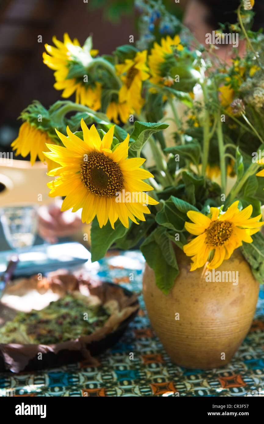 France, Vaucluse, Luberon, Roussillon, sunflowers in a vase - Stock Image