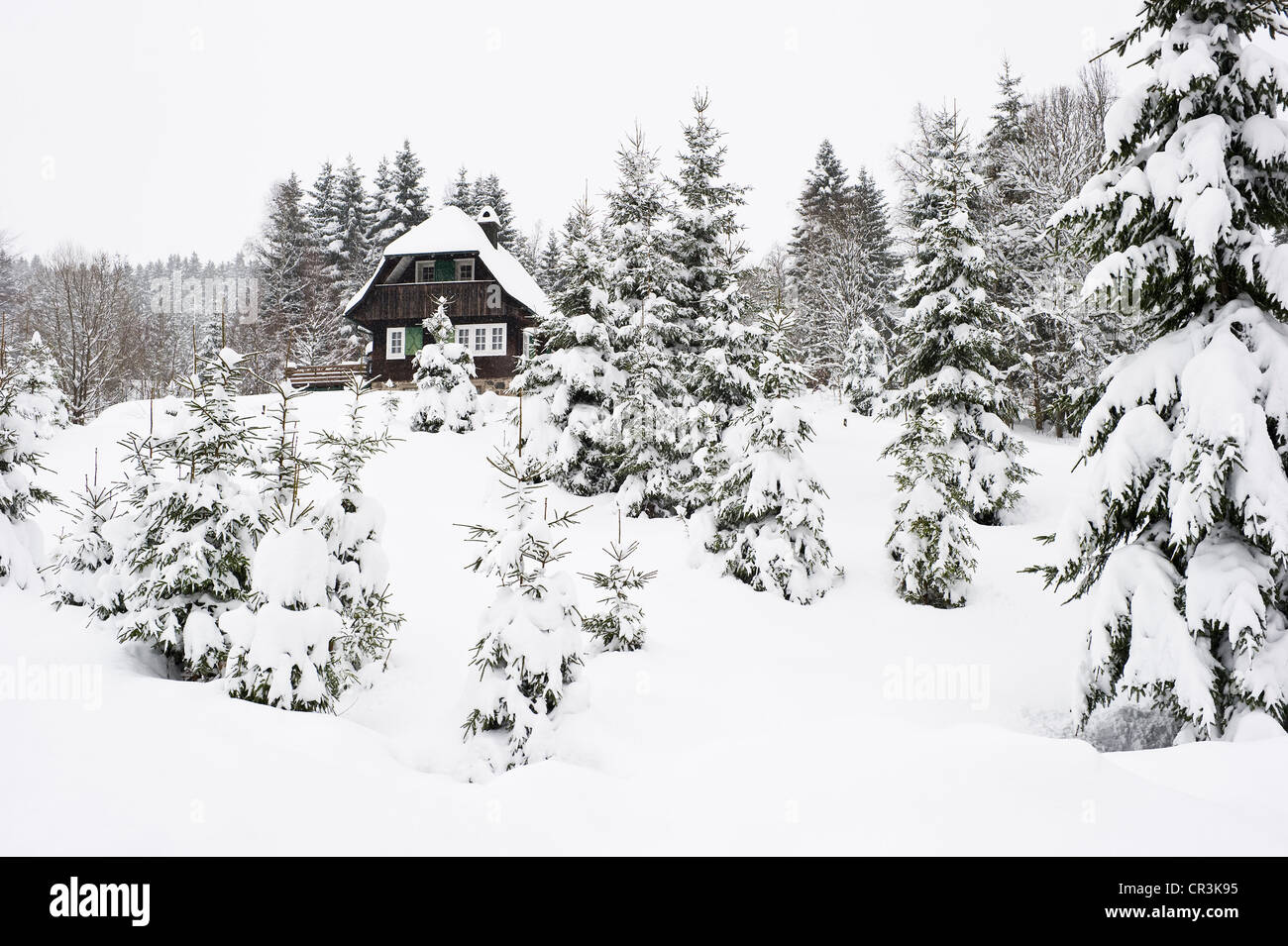 Snow-covered firs and lodge at Hinterzarten, Black Forest, Baden-Wuerttemberg, Germany, Europe - Stock Image