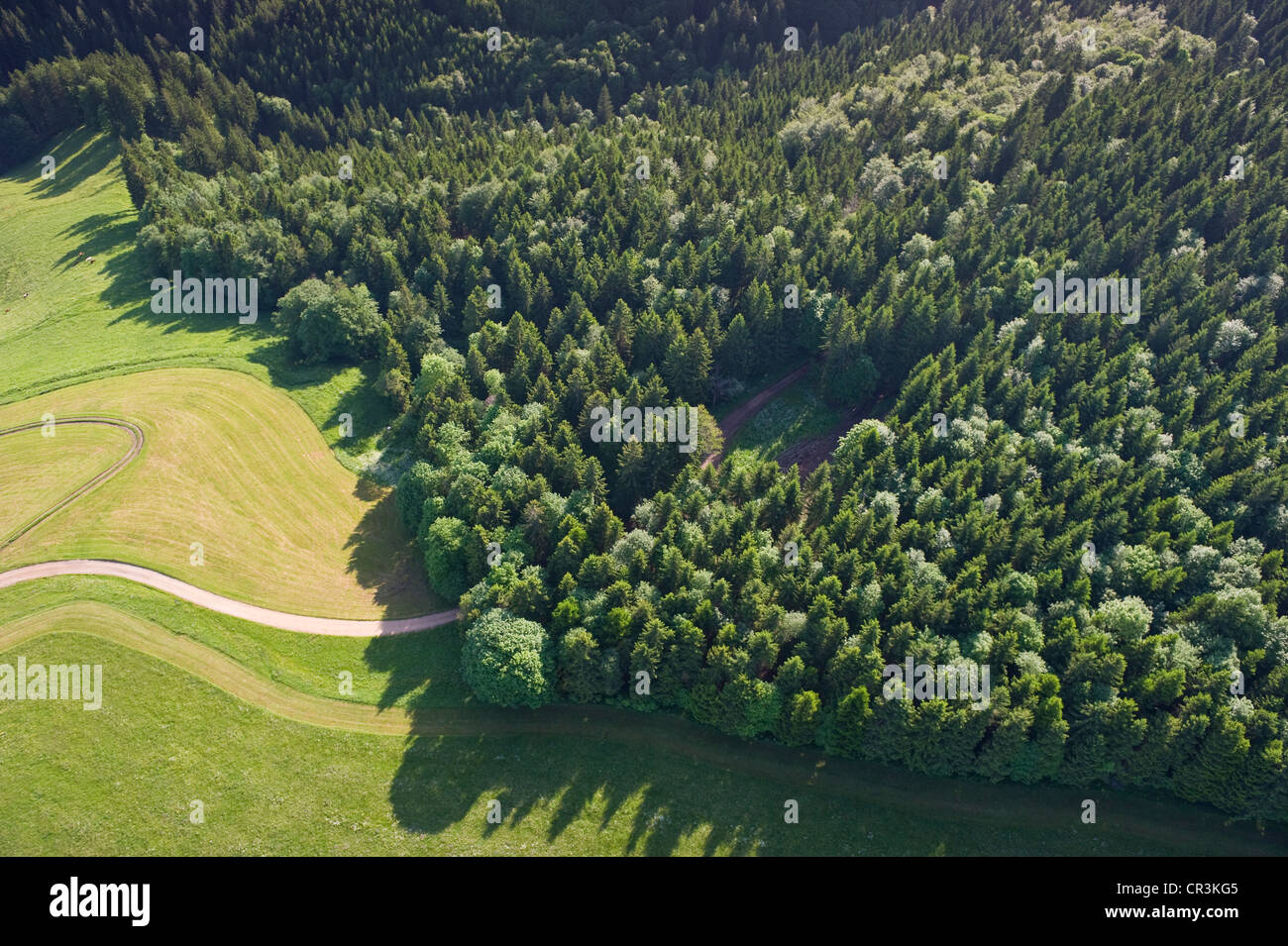 Aerial view, coniferous forest and meadow, Black Forest, Baden-Wuerttemberg, Germany, Europe - Stock Image
