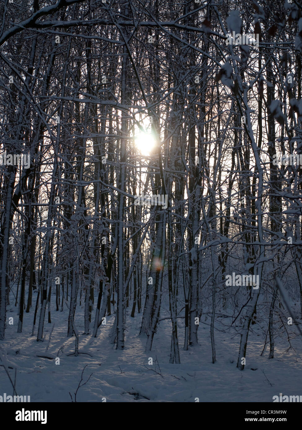 Snow-covered forest, Gysenberg, Herne, Ruhr Area, Germany, Europe - Stock Image