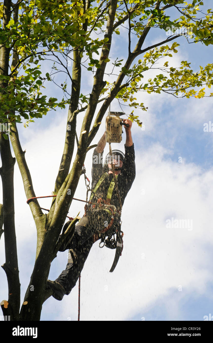 Tree climber with a chain saw, hooks, ropes and safety devices cutting down a tree, tree care services, PublicGround Stock Photo