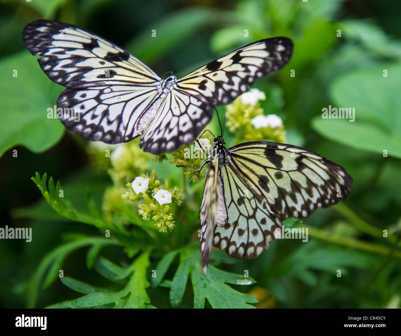 The Butterfly Farm, Stratford upon Avon, England - Stock Image