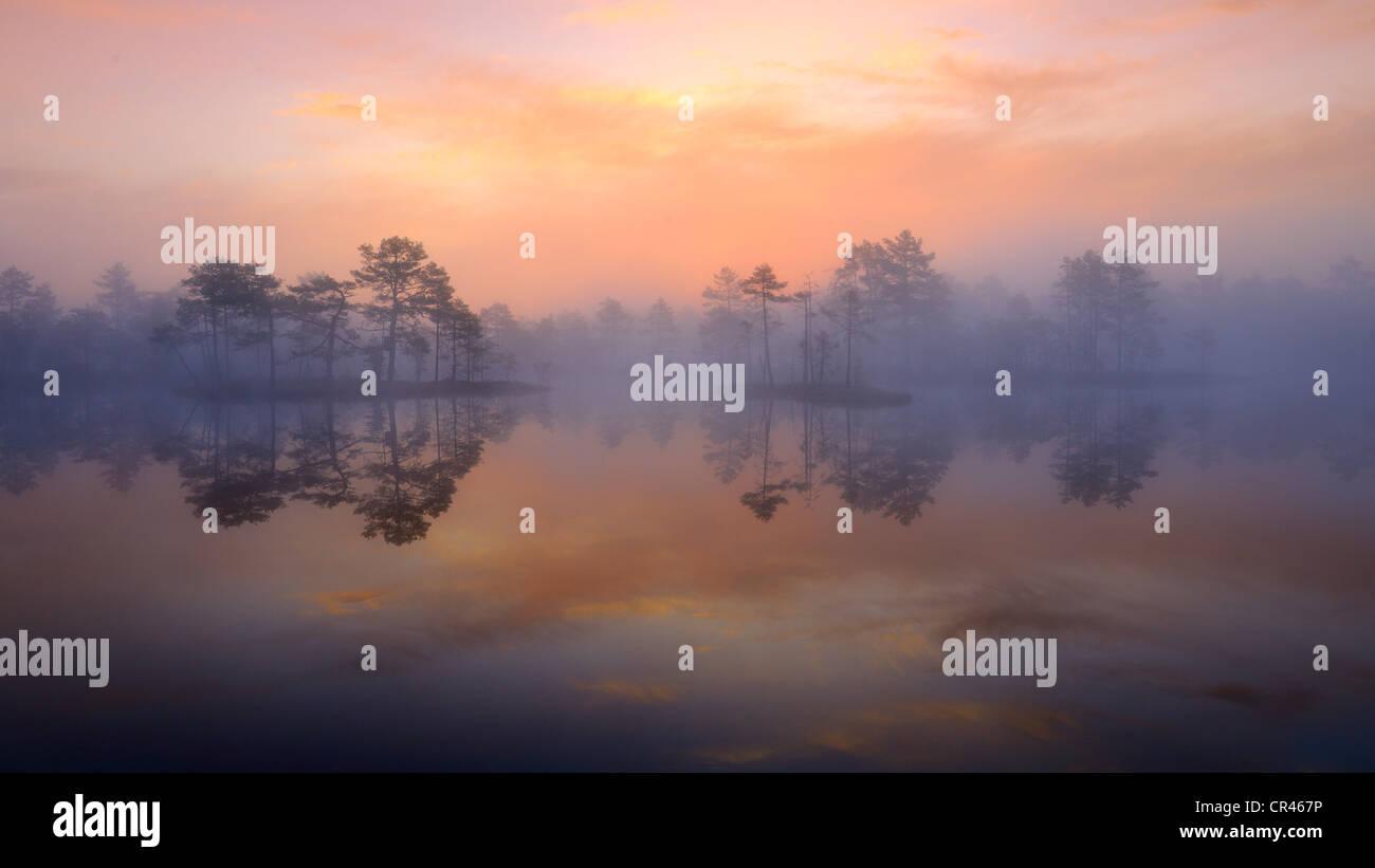 Early morning, dawn, in the swamp, Dalarna, Sweden, Scandinavia, Europe - Stock Image