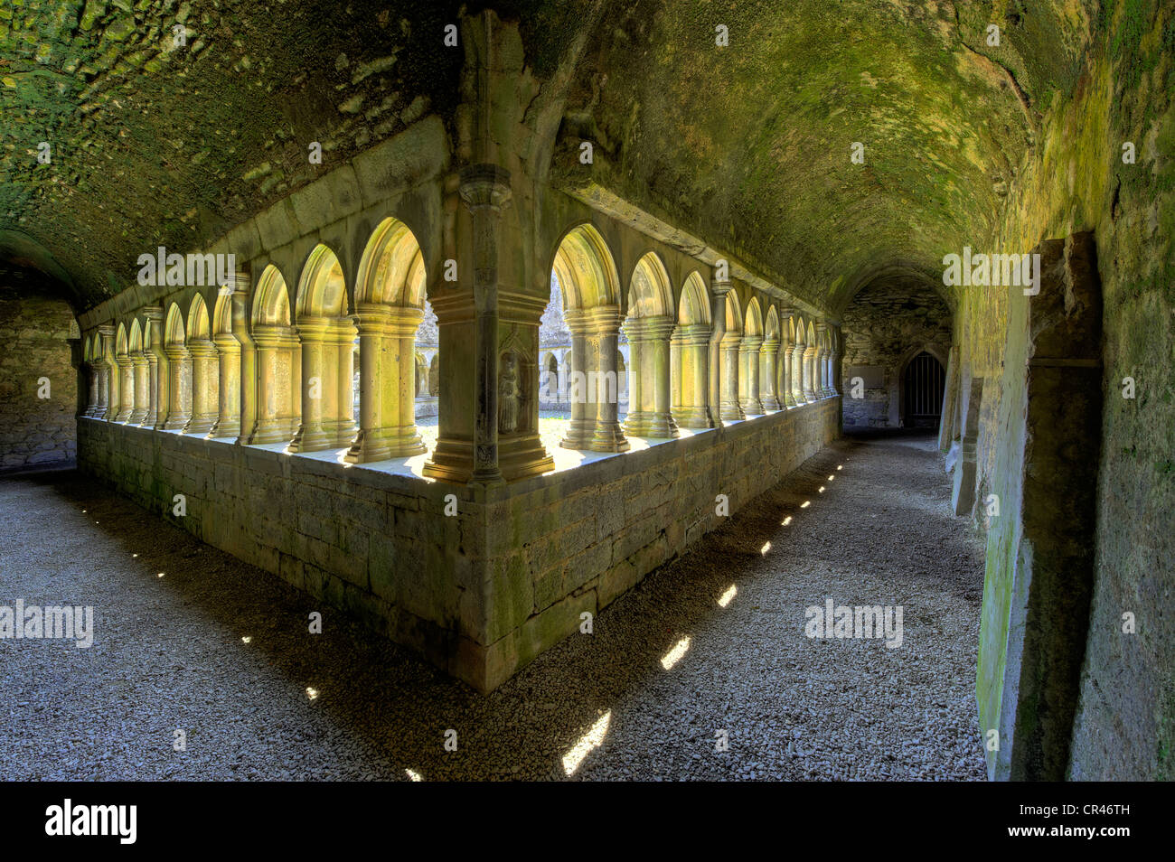 Cloister, ruins of the former Franciscan monastery, Askeaton, County Limerick, Ireland, Europe - Stock Image