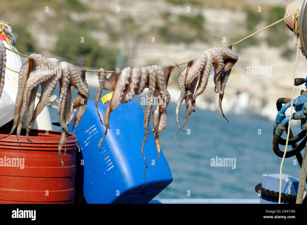 Octopus suspended to dry, port city of Pythagorio, Samos Island, Aegean Sea, southern Sporades islands, Greece, - Stock Image