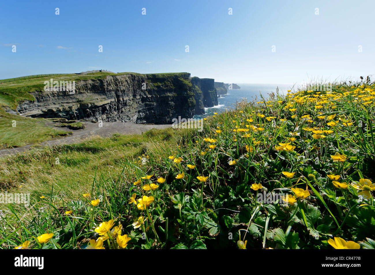 Cliffs of Moher, County Clare, Ireland, Europe - Stock Image
