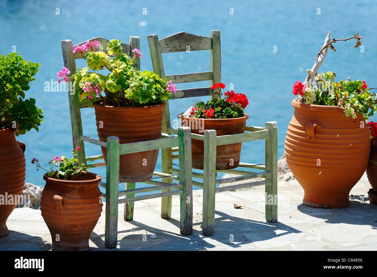 Flower pots, chairs, Kokkari, Samos Island, Aegean, southern Sporades, Greece, Europe - Stock Image