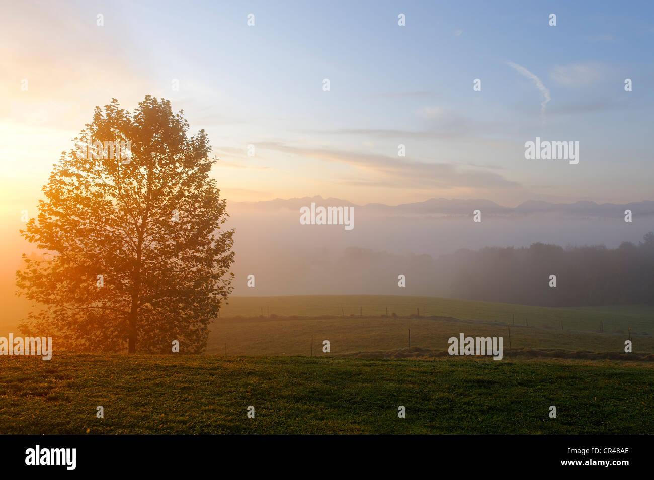 Morning mist from Aschbacher Berg mountain, Feldkirchen-Westerham in front of Wendelstein and Schliersee mountains - Stock Image