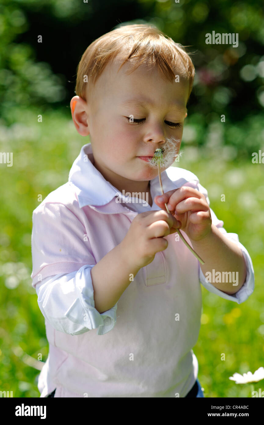 Little boy, 2 years, with a dandelion clock in the garden - Stock Image