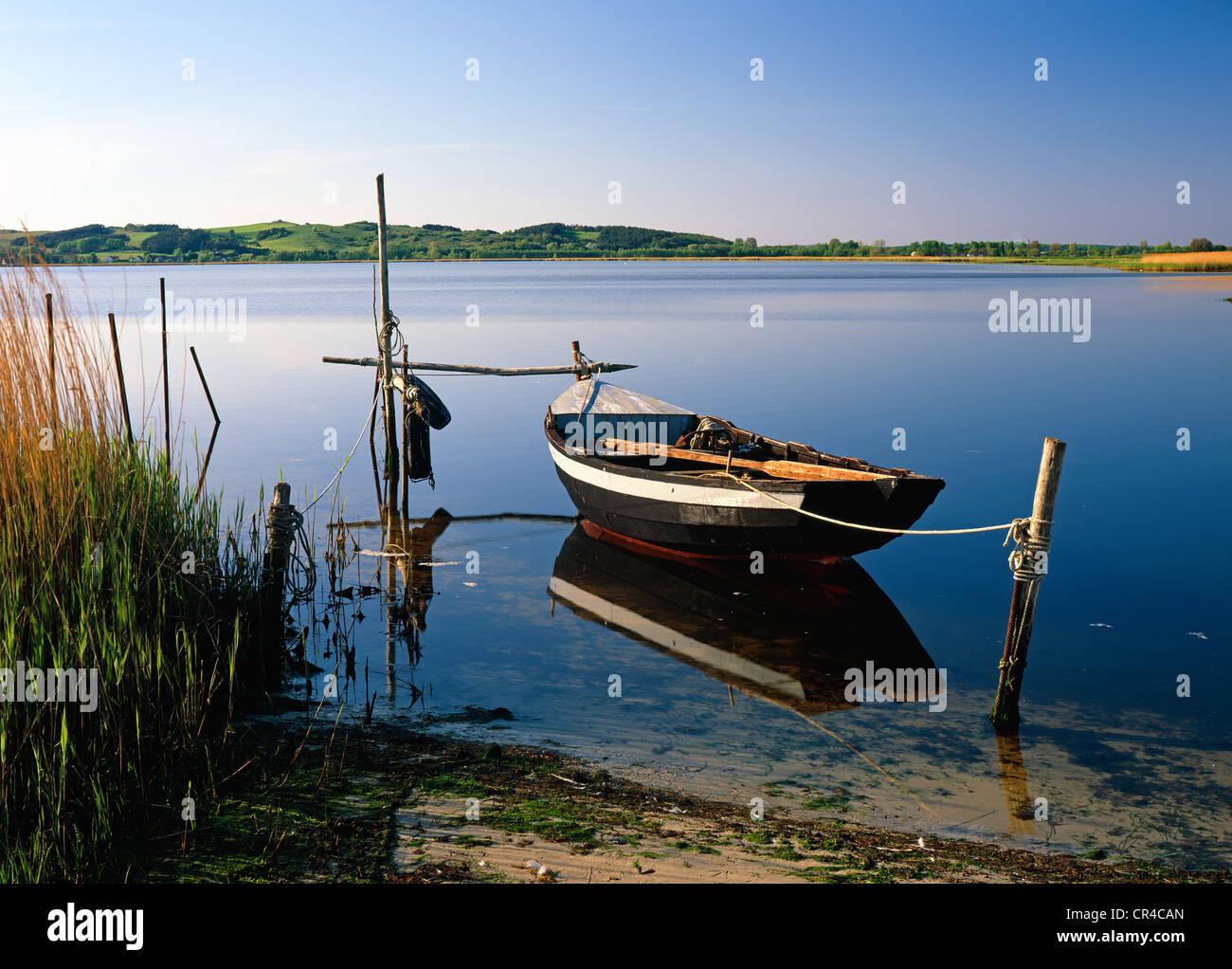 Bodden, brackish body of water, Ruegen, Mecklenburg-Western Pomerania, Germany, Europe - Stock Image