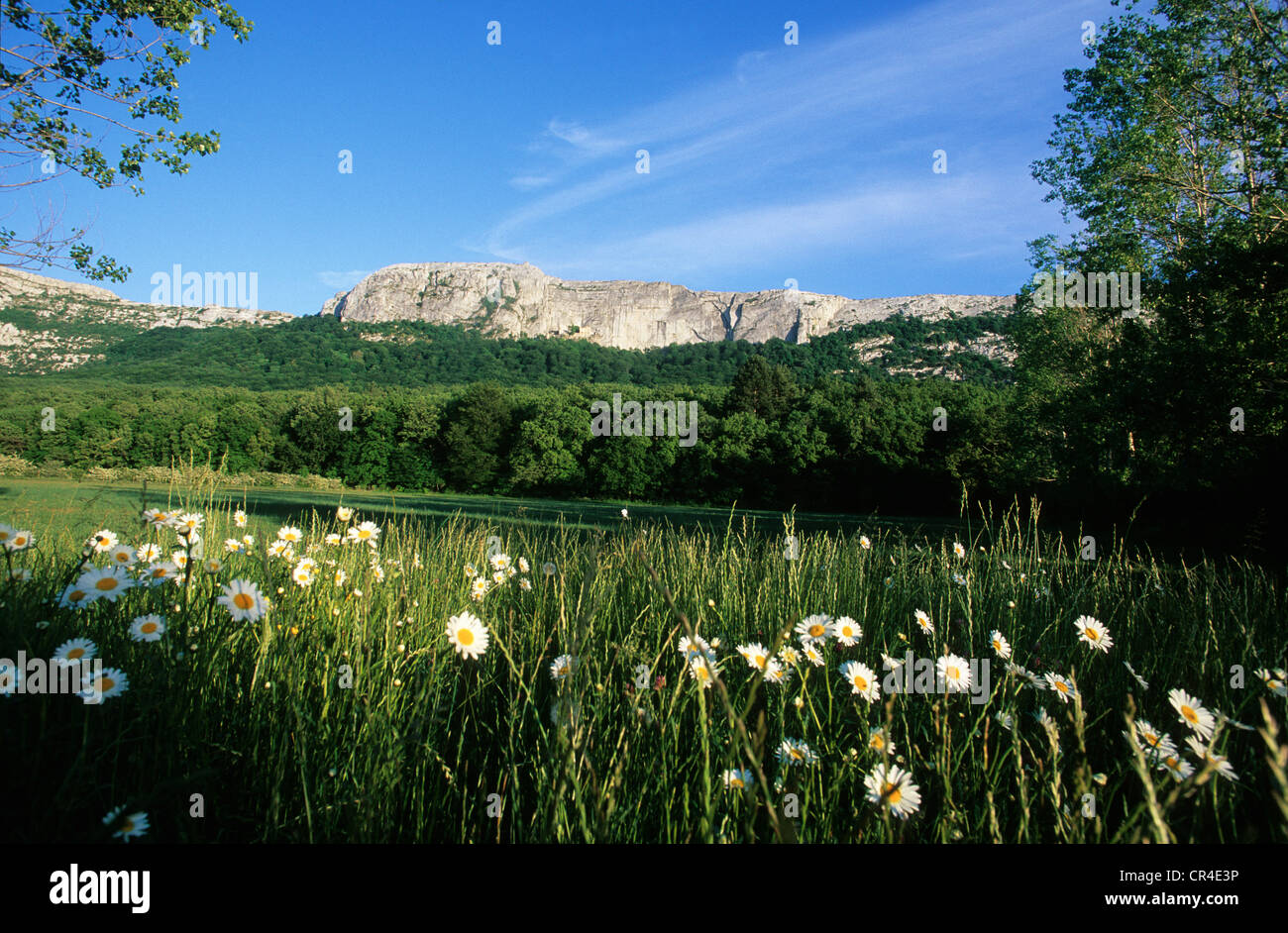 France, Var, the Sainte Baume - Stock Image