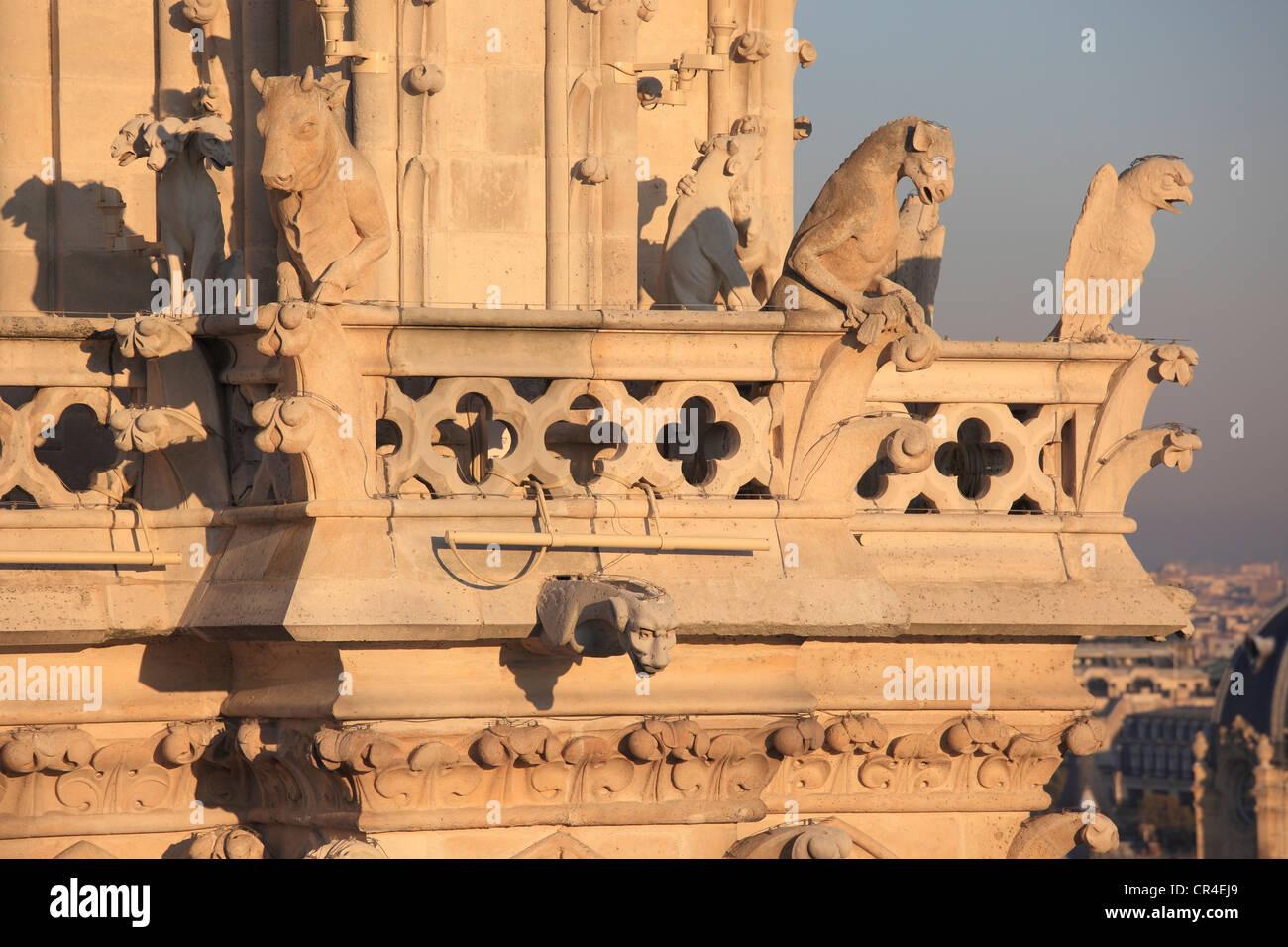 France, Paris, Ile de la Cite, Notre Dame de Paris cathedral, gargoyles on the chimeras hall - Stock Image