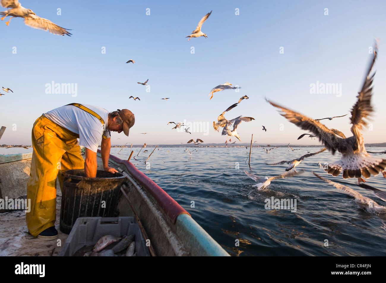 France Herault Sete Bassin de Thau fisherman surrounded by seagulls in his small boat taking out his conical fishing - Stock Image
