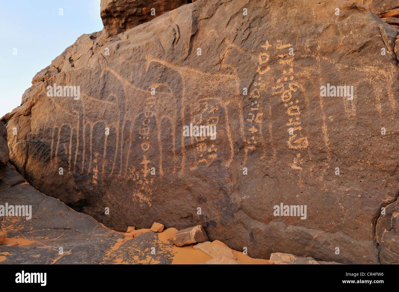 Rock engraving of a giraffe and Tifinagh writings, Adrar Tekemberet, Immidir, Algeria, Sahara, North Africa - Stock Image