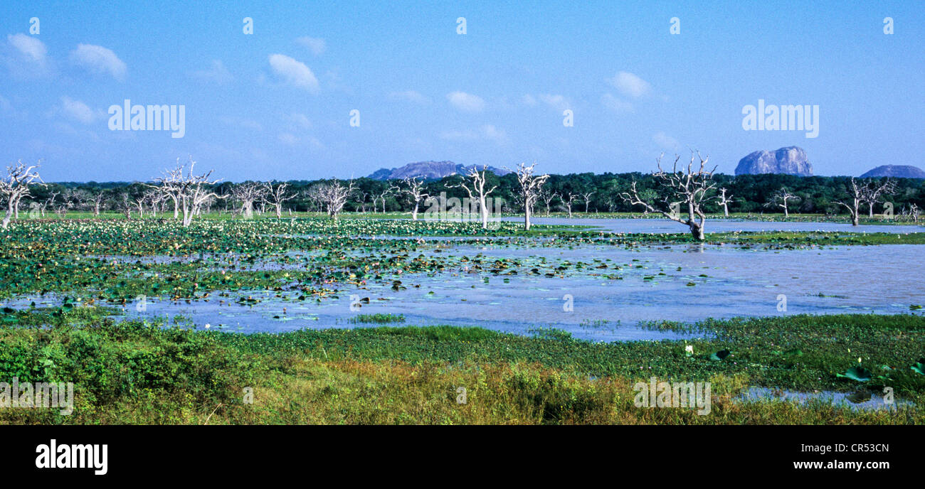 Yala National Park, Sri Lanka - Stock Image
