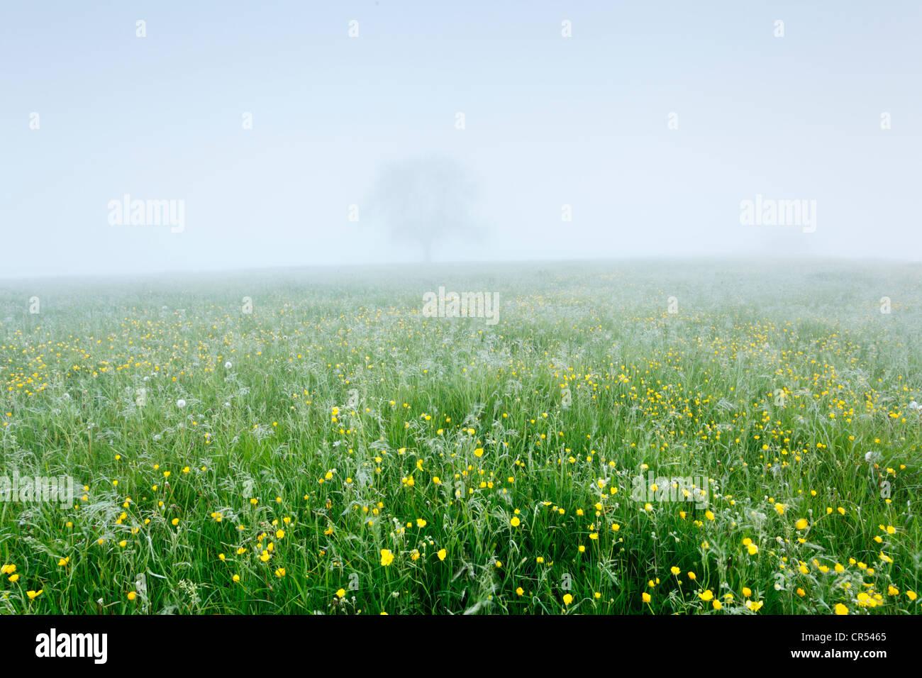 Misty Meadow in the Mendip Hills. Somerset. England. UK. - Stock Image
