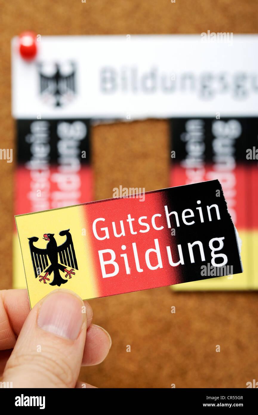 Vouchers on a noticeboard, Bildungsgutschein coupons, lettering 'Gutschein Bildung', German for 'education - Stock Image