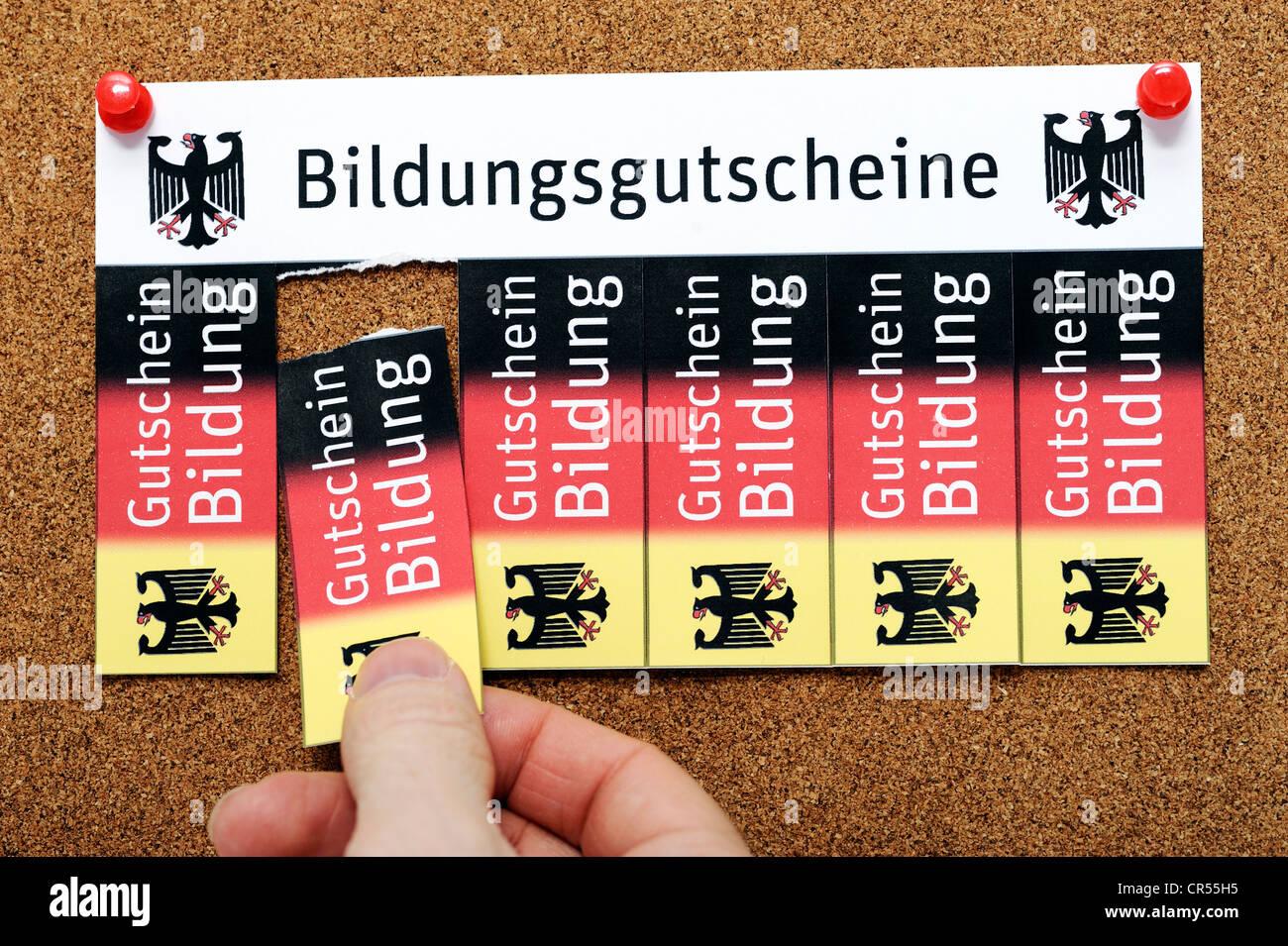 Vouchers on a noticeboard, lettering 'Bildungsgutscheine', German for 'education vouchers', symbolic - Stock Image