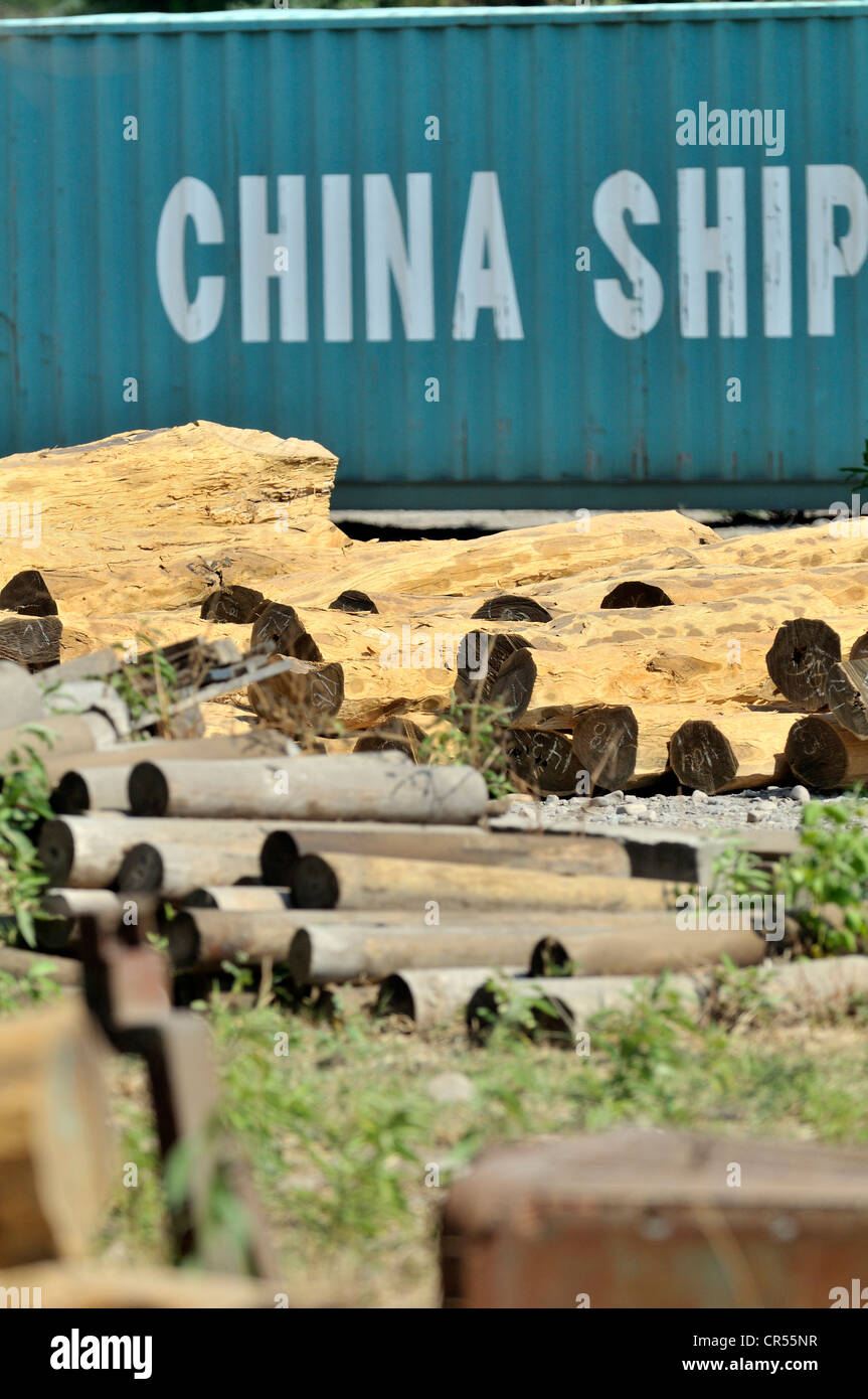 Logs from the Chaco region in front of a container labeled 'China Shipping', export of valuable tropical - Stock Image