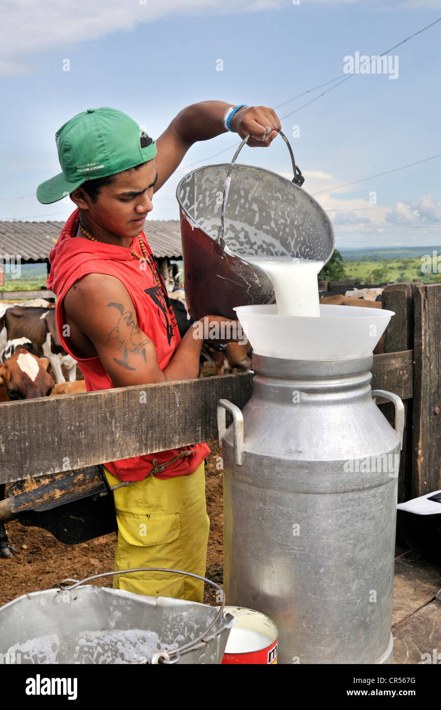 Teenager pouring fresh milk into a large milk churn, traditional dairy farming, settlement of the Movimento dos Stock Photo
