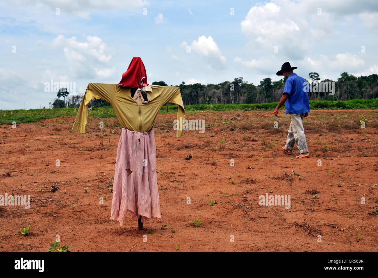 Scarecrow in a field owned by a peasant farmer, Acampamento 12 de Otubro landless camp, Movimento dos Trabalhadores - Stock Image
