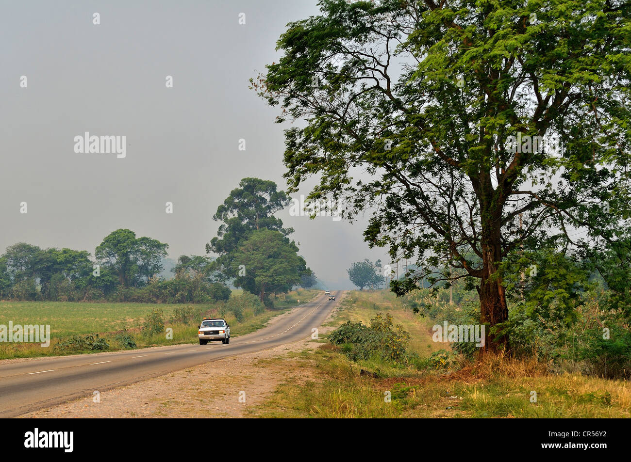 Energy crops such as soybeans, sugar cane and tropical woods are exported from the Gran Chaco region on state highway - Stock Image