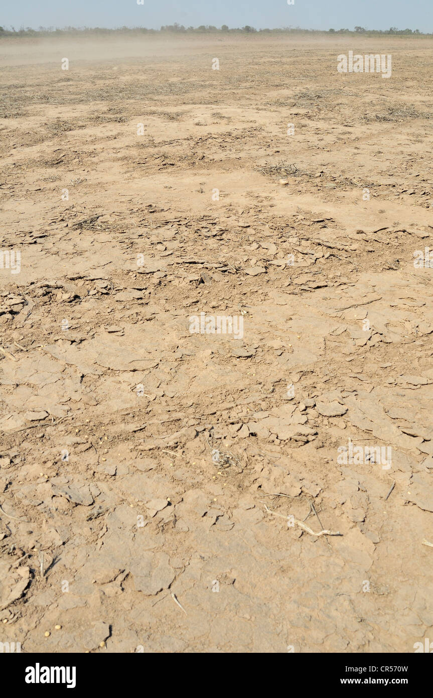 Erosion, nutrient-rich soils are being blown away by the wind from cleared areas, Gran Chaco region,  province, - Stock Image
