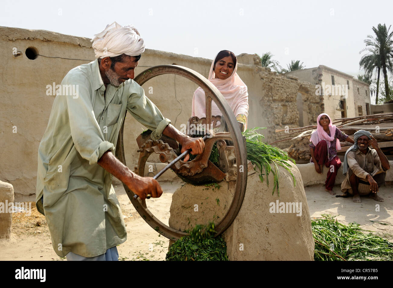 Farmer and his daughter are chaffing grass to feed it to goats and cattle, Basti Lehar Walla village, Punjab, Pakistan, - Stock Image