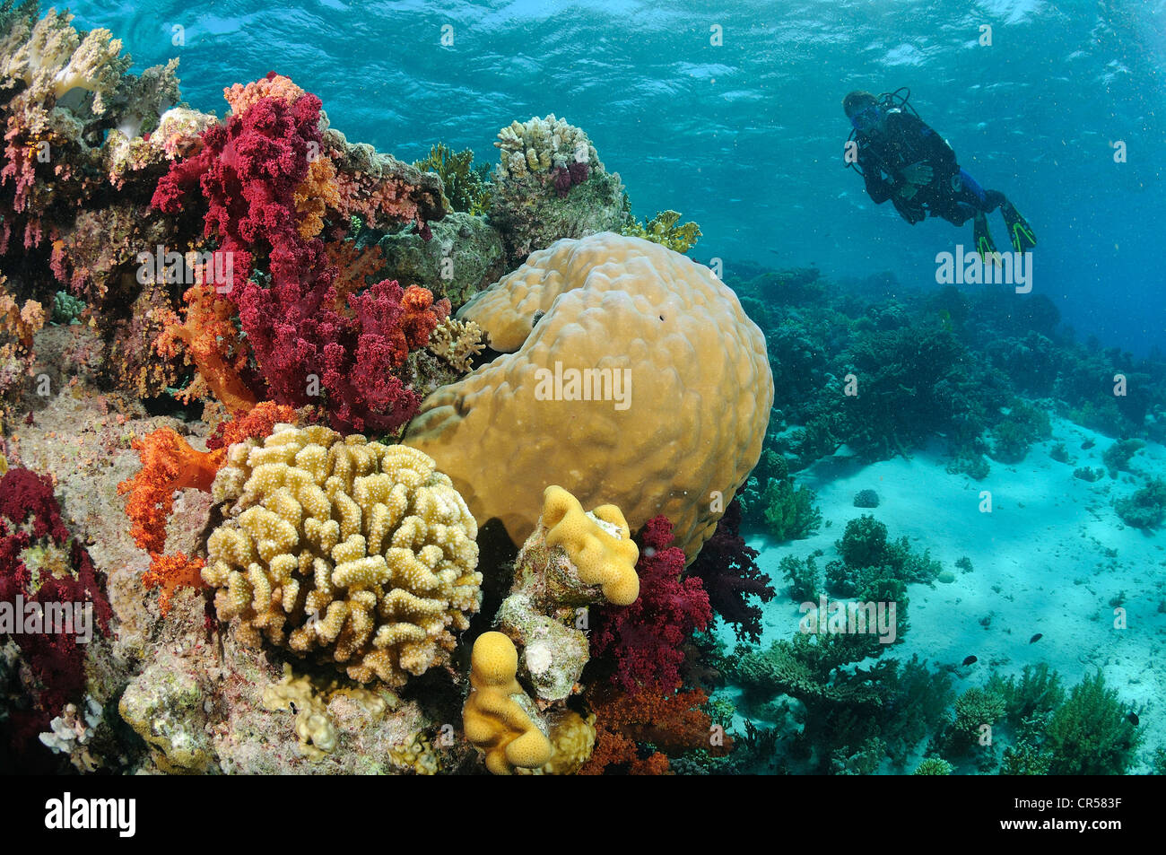 Egypt, Red Sea, a coral reef - Stock Image