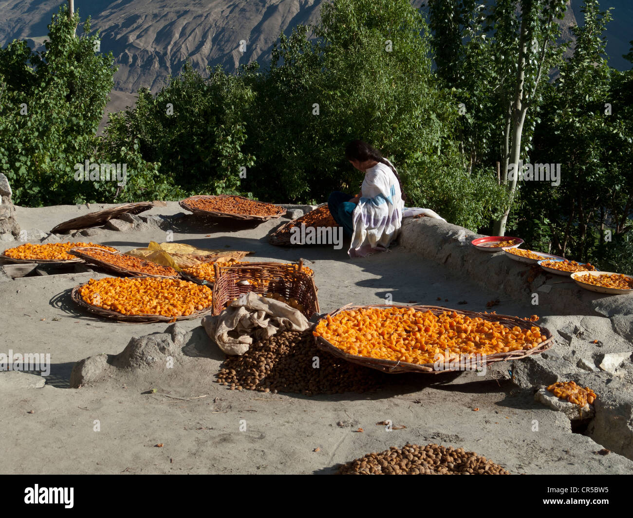 Dried apricots, in the area of Karimabad, North West Frontier, Pakistan, South Asia - Stock Image
