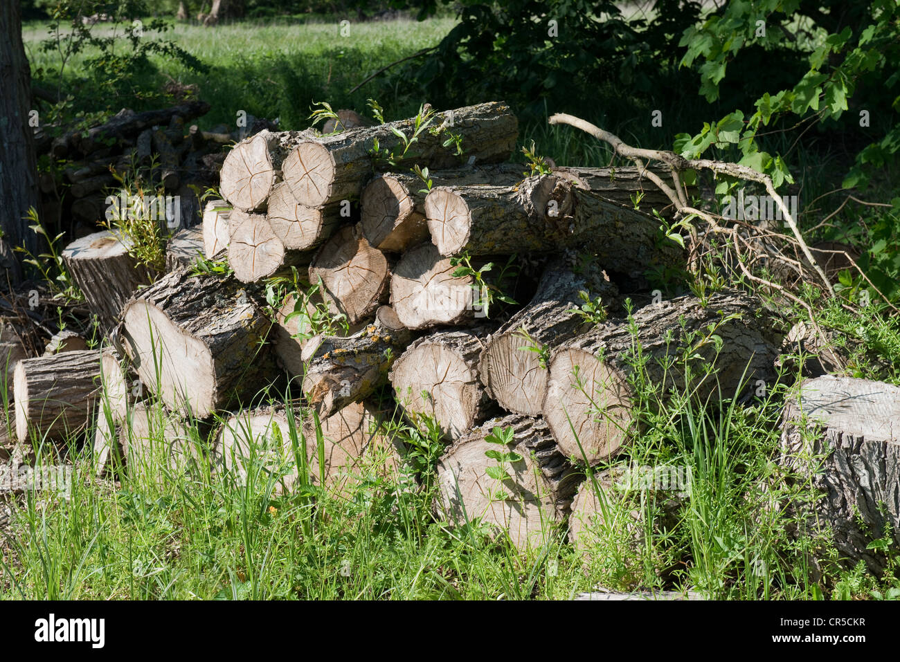 Pile of Logs beside The River Thames at Goring -1 - Stock Image