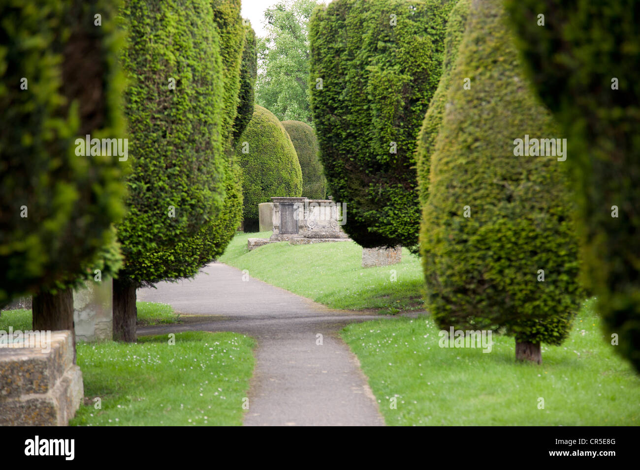Yew trees St Marys Church, Painswick, Stroud, Gloucestershire - Stock Image