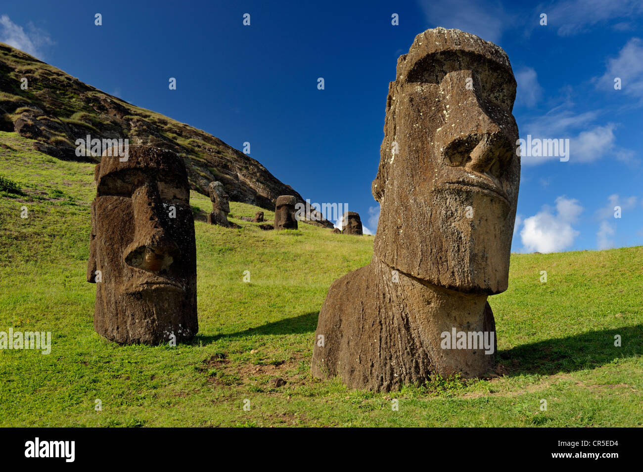 Sculptured stone statues, unfinished moai at Rano Raraku, the volcano from where the moai were hewn out of volcanic - Stock Image