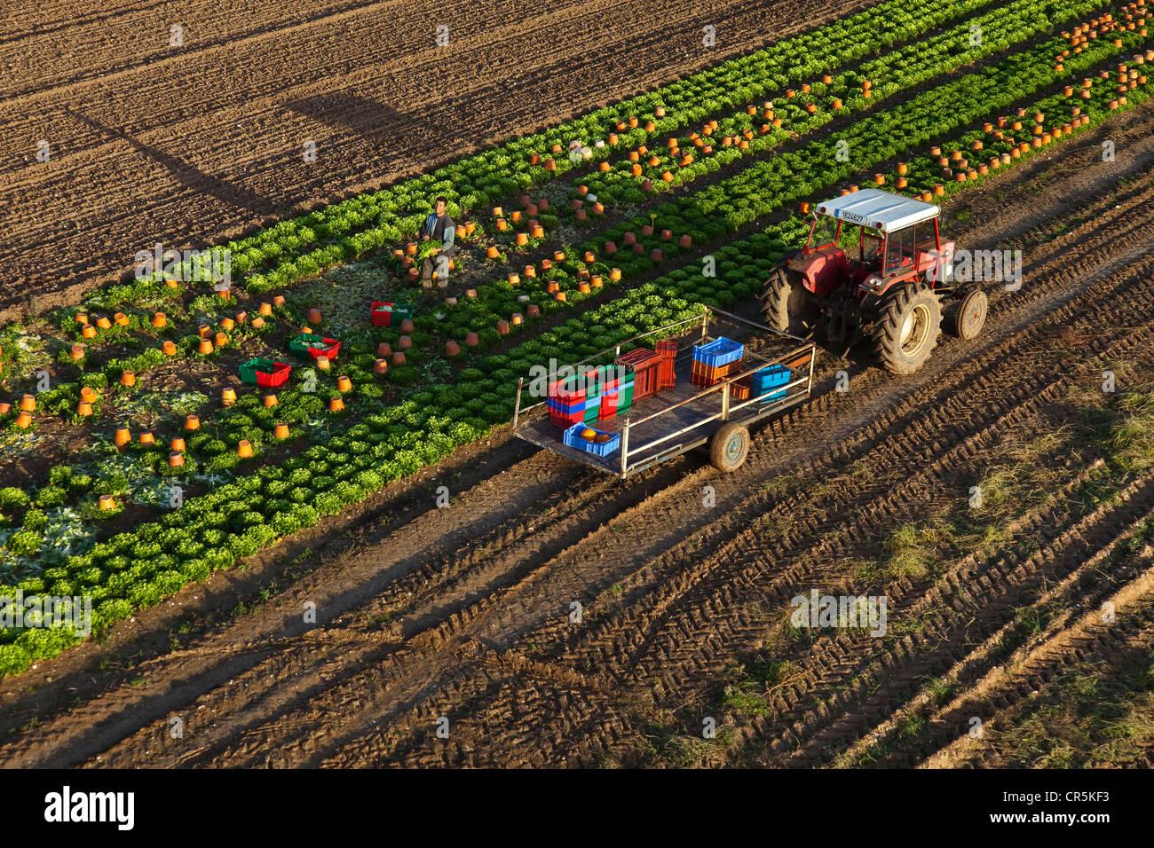 Market Gardening Stock Photos & Market Gardening Stock Images - Alamy