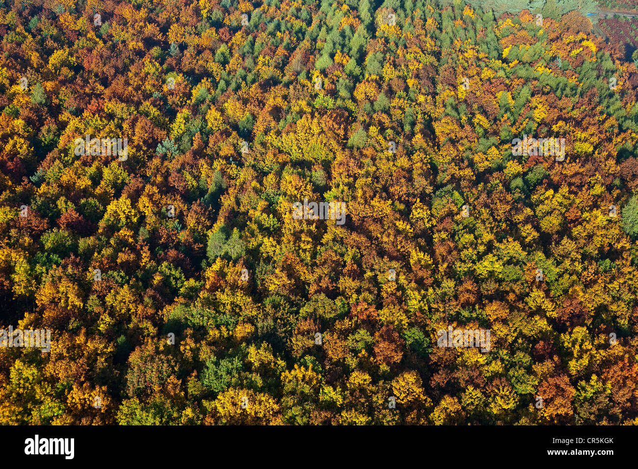 France, Eure, Vernon, automnal colours over forest of Bizy (aerial view) - Stock Image