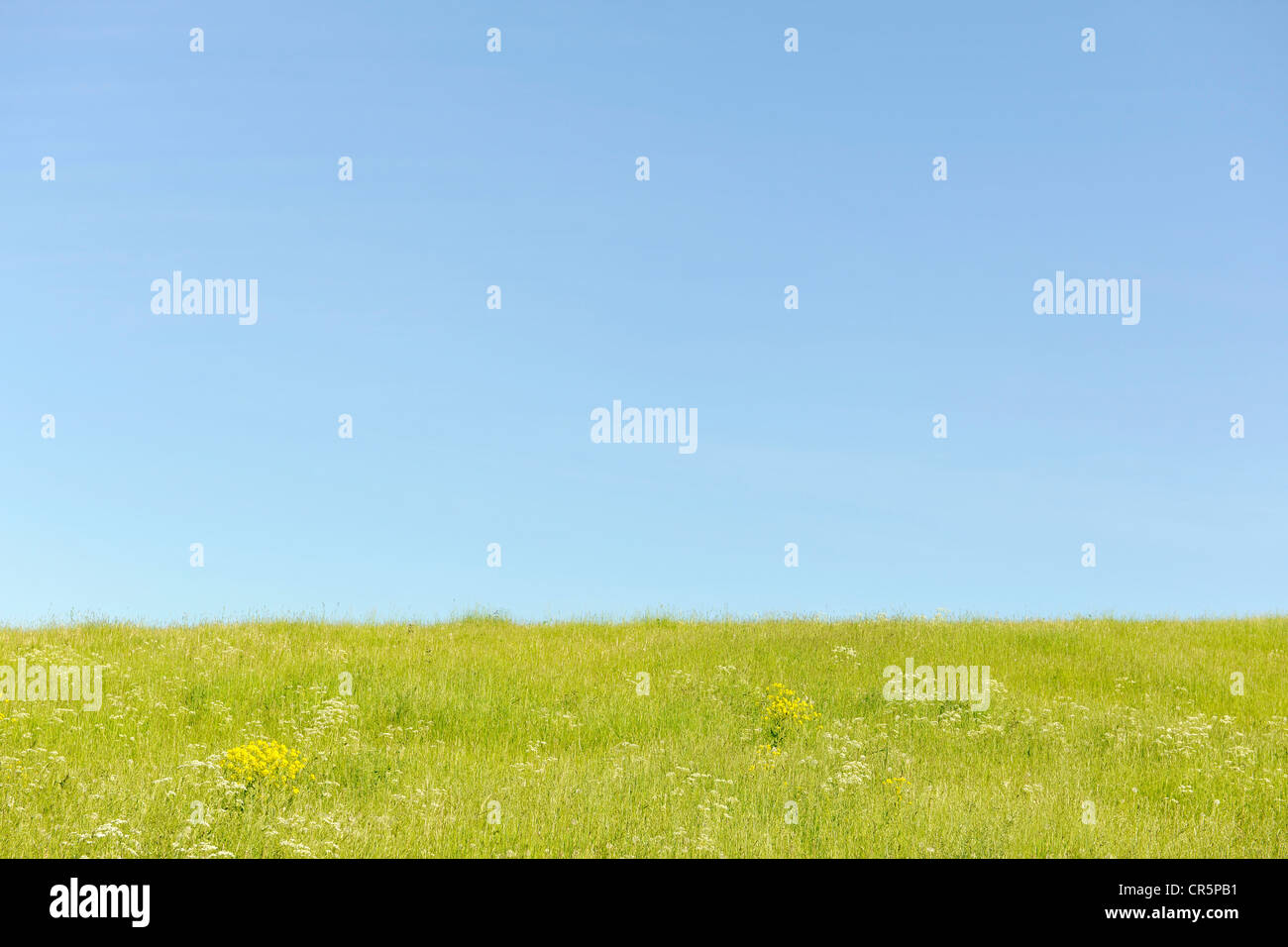 Spring meadow and blue sky, with space in the sky for text, Thuringia, Germany, Europe - Stock Image