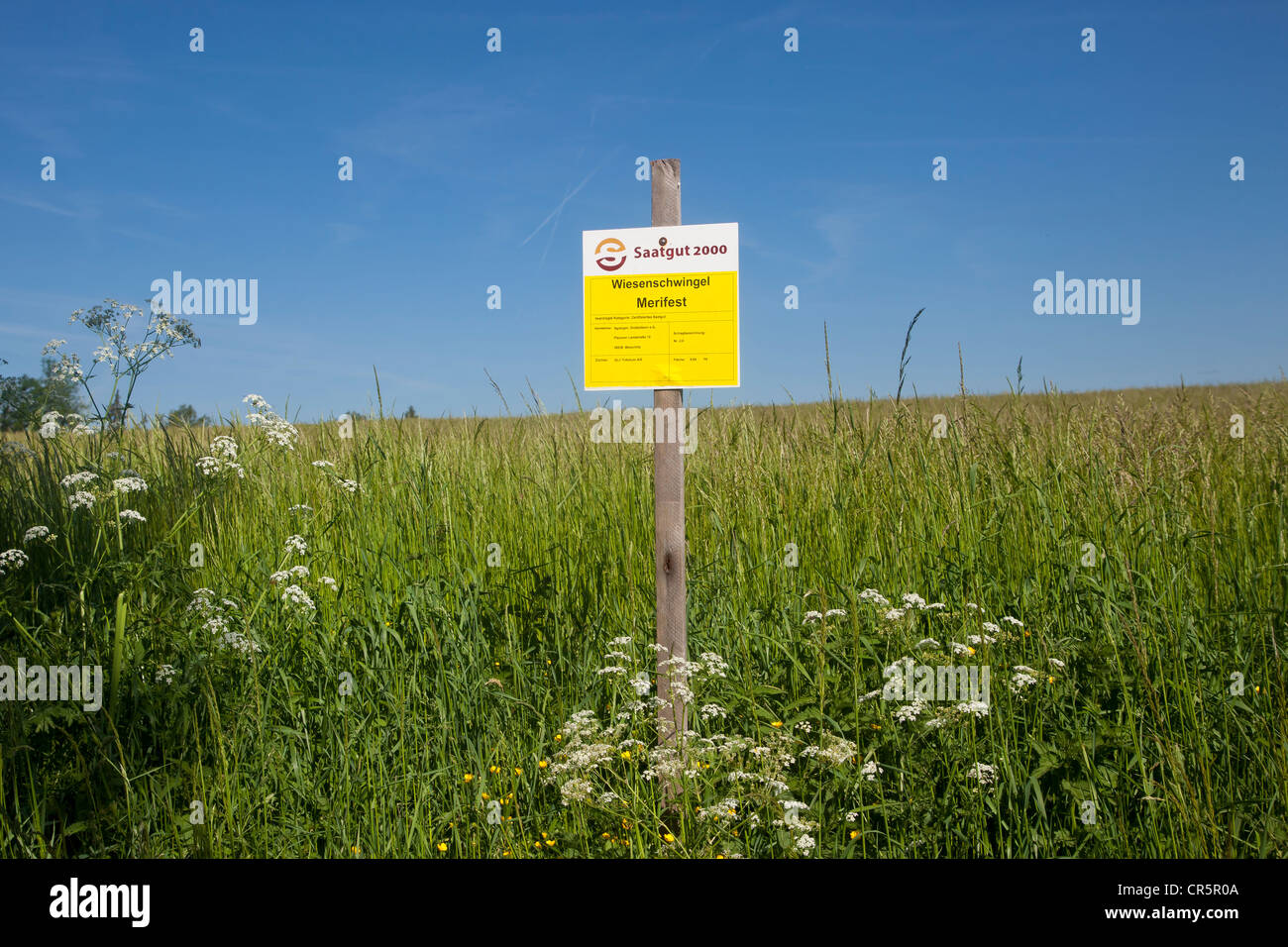Experimental fields for certified seeds, Vogtland region, Saxony, Germany, Europe - Stock Image