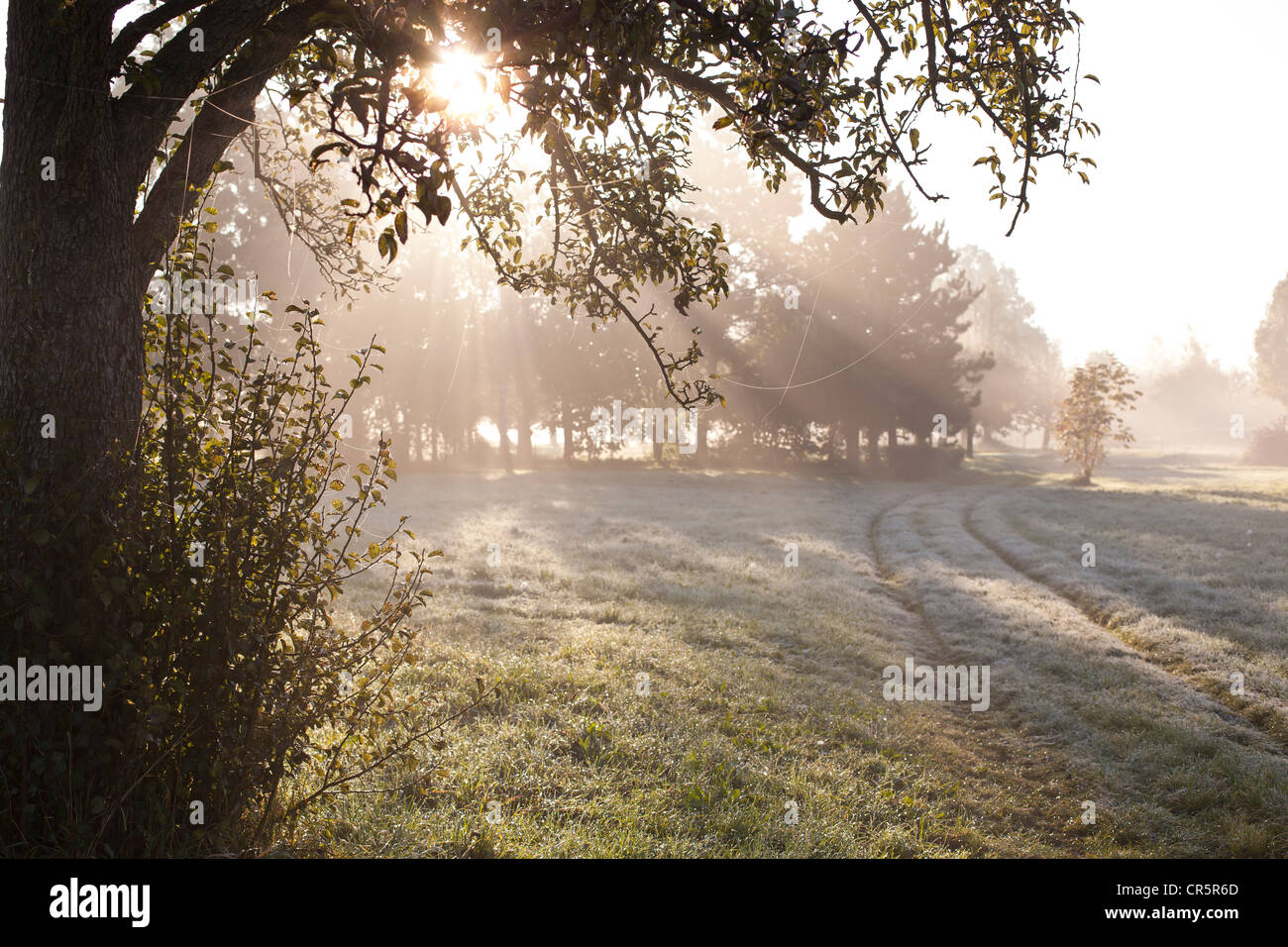 Morning fog on an autumn day, spider web covered in dew, Coswig, Saxony, Germany, Europe - Stock Image