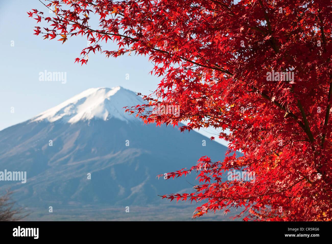 Japan, Honshu Island, Kansai Region, the Mount Fuji (3776m) seen from the shores of the lake Kawaguchiko - Stock Image