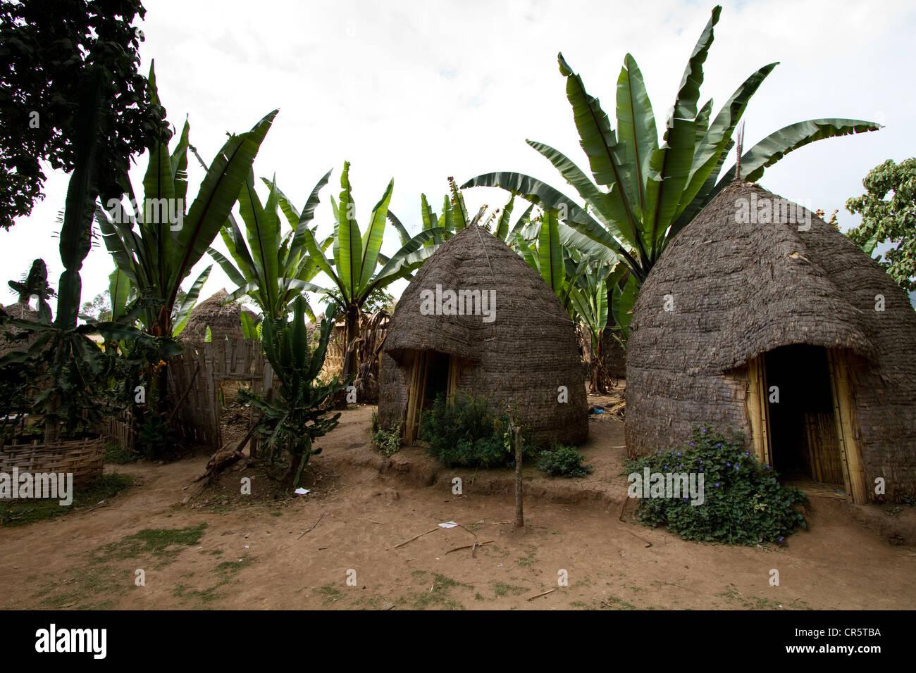 Beehive-shaped huts, Dorze village, near Arba Minch, Omo Valley, South Ethiopia, Africa Stock Photo