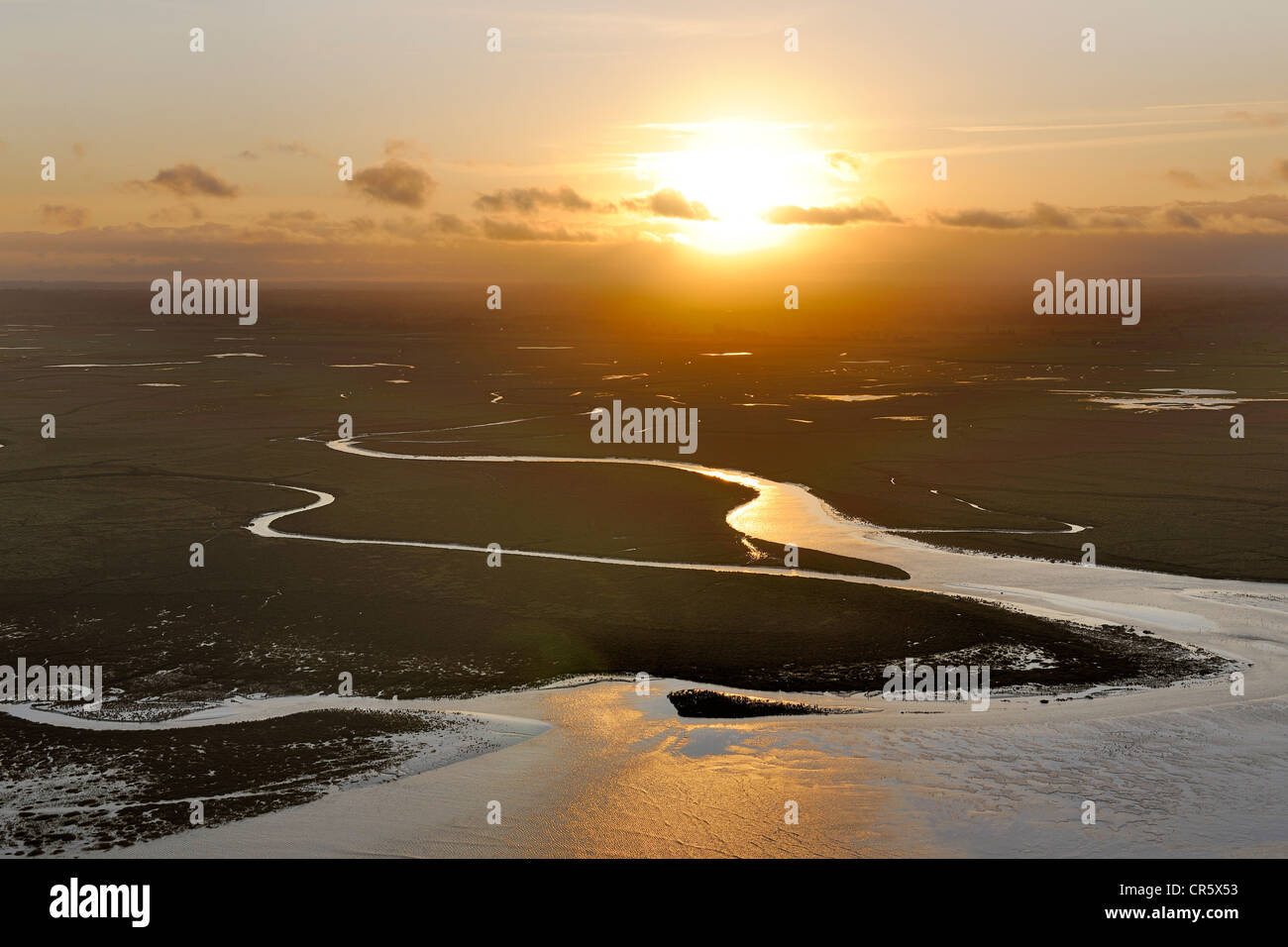 France, Manche, tide going up in the salt marshes of the Mont Saint Michel at dawn - Stock Image
