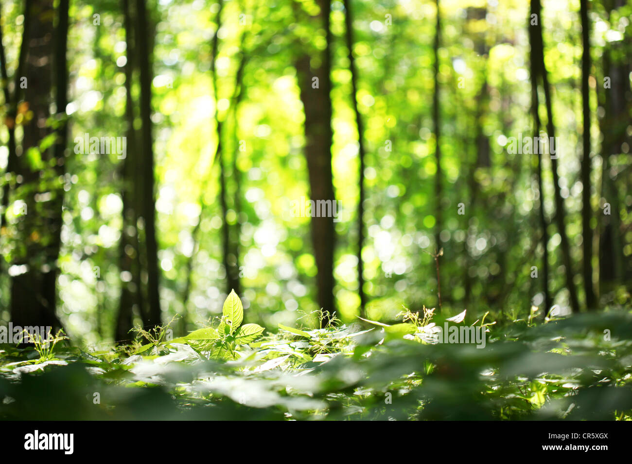 Blur Background Forest High Resolution Stock Photography And Images Alamy