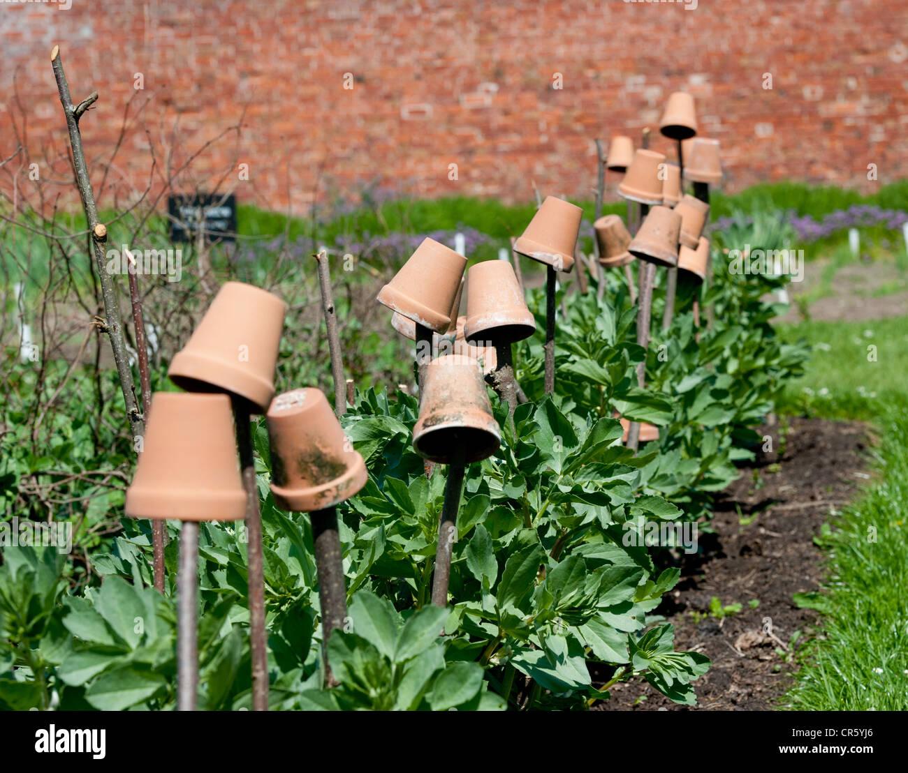 Cottage Garden Pots Cottage garden plant pots vegetables stock photo 48689262 alamy cottage garden plant pots vegetables workwithnaturefo