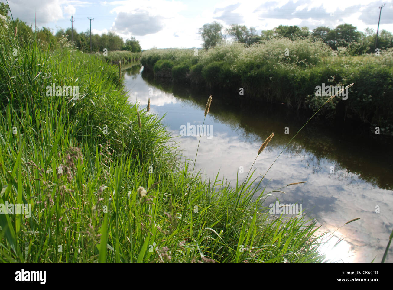 The Six Mile river in County Antrim on a summer evening. Picture by: Adam Alexander/Alamy - Stock Image
