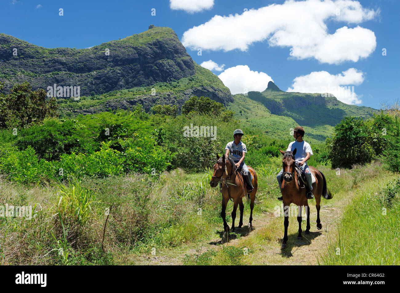 Mauritius, Moka District, Pailles, Domaine des Pailles, horse rides in the heart of the Moka Range Valley - Stock Image