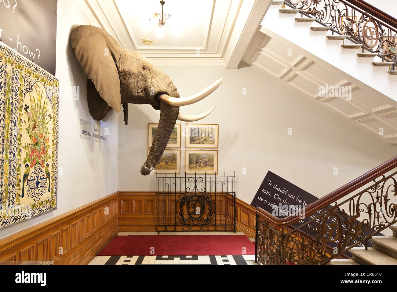 South africa kwazulu natal province durban city hall entrance of the natural science museum trophy of an elephant head